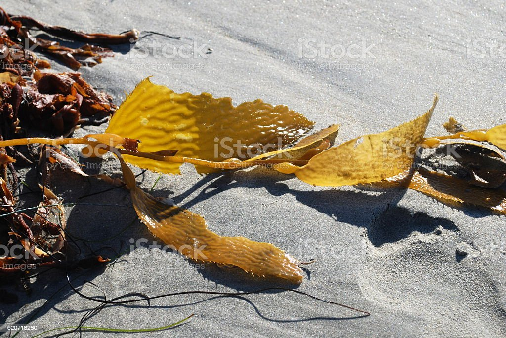 Seaweed on sand with footprint stock photo