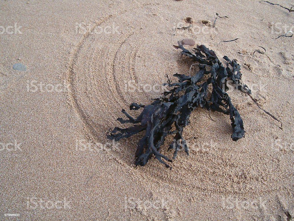 seaweed on sandy beach royalty free stockfoto