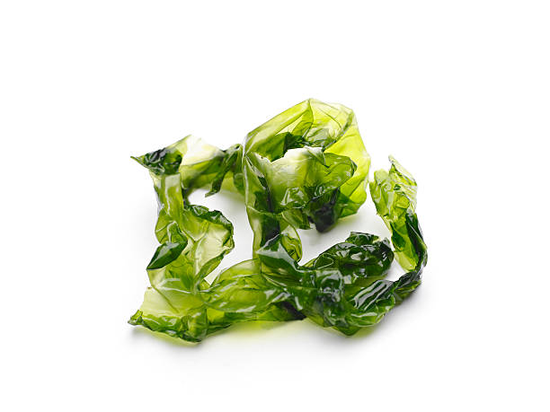 Aux algues - Photo