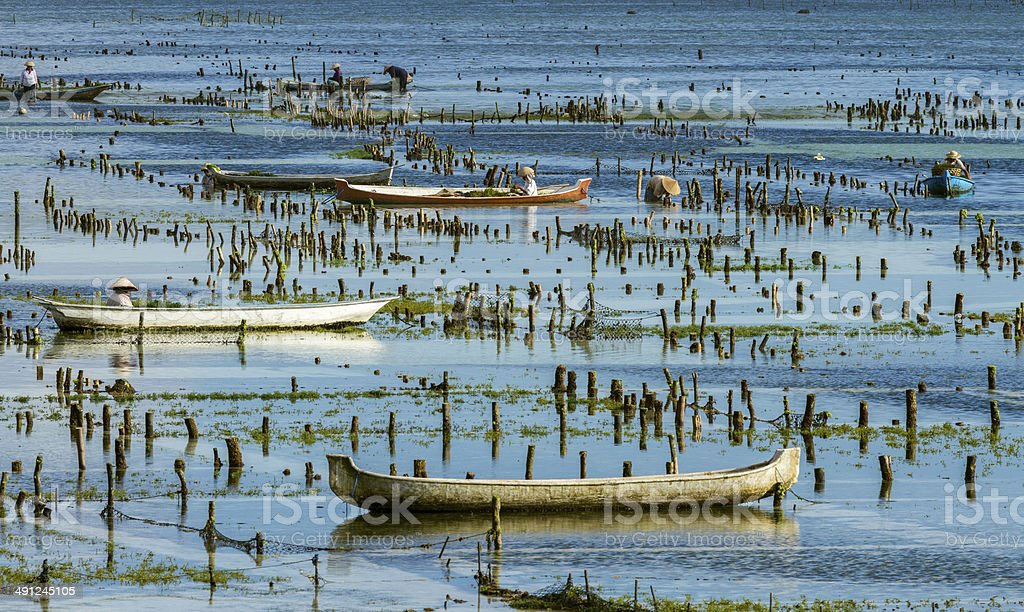 Seaweed plantation in Bali royalty-free stock photo