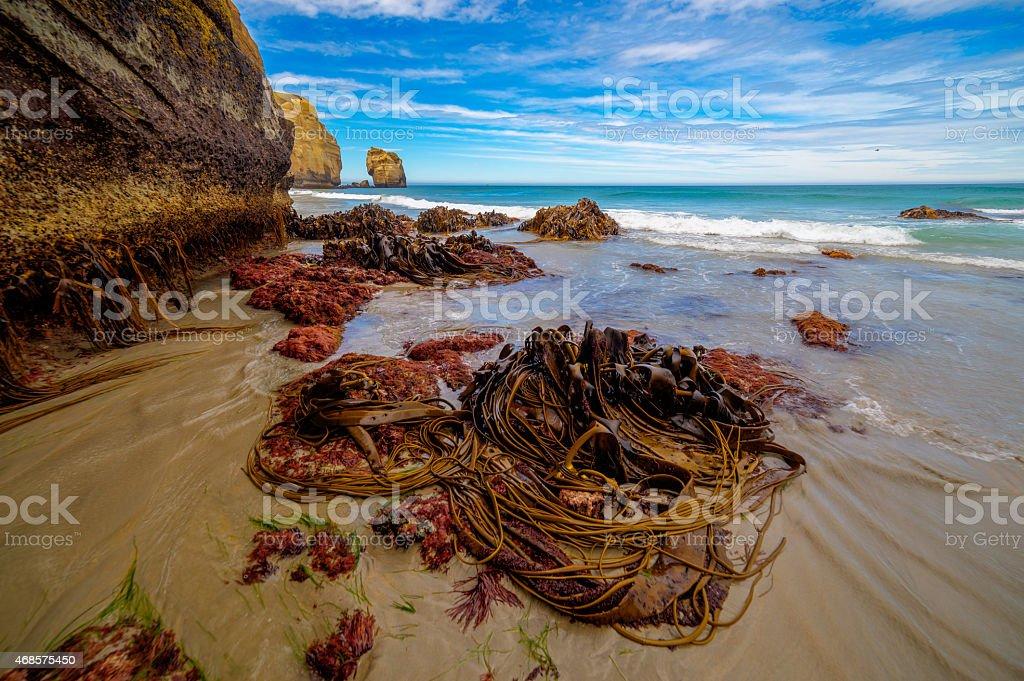 Seaweeds en la marea baja en el túnel de la playa - foto de stock