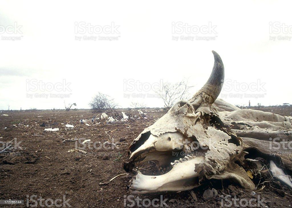 Secherres in Africa stock photo