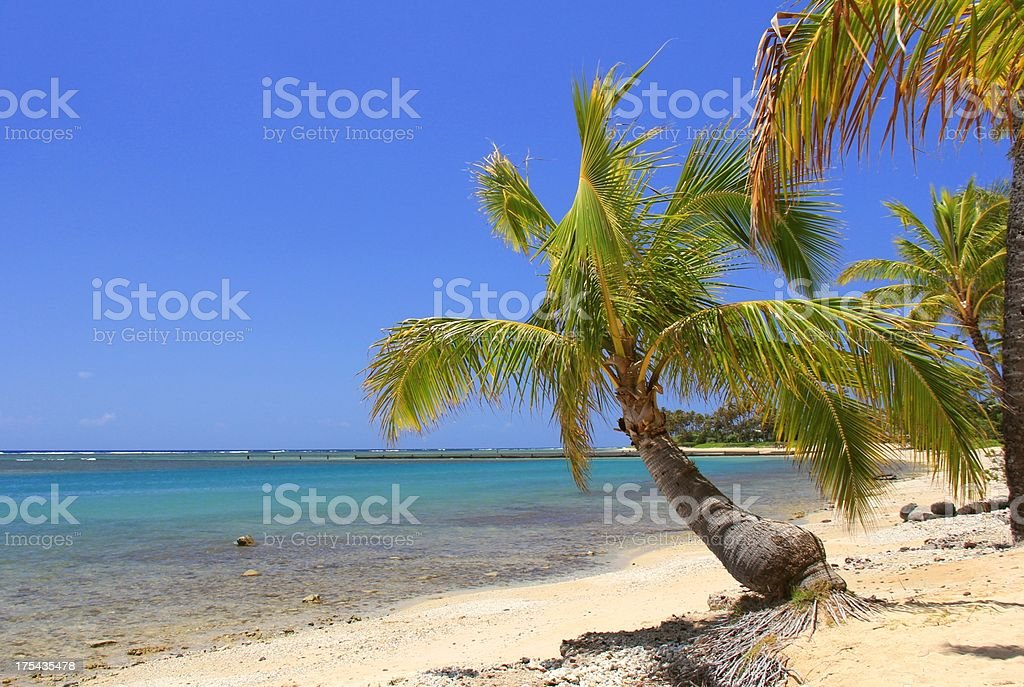 Secluded Oahu Hawaii Pacific ocean palm tree beach scenic stock photo