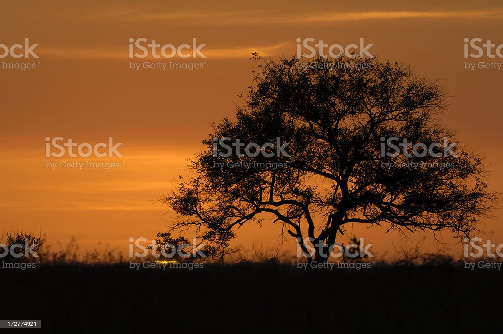 Seconds after the sun begins to rise royalty-free stock photo