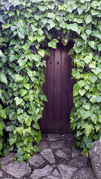 Secret doors behind ivy fence stock photo