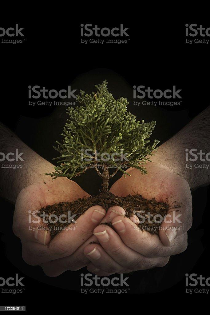 Secret Growth royalty-free stock photo