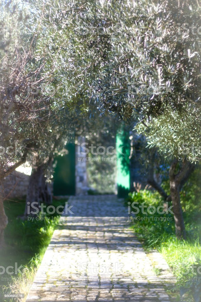 Olives, Cobbles, Turquoise Gate and Mystery. Shot in Sicily.