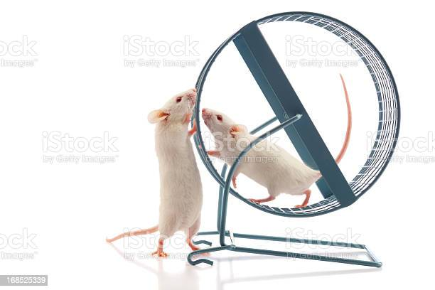 Secret Meeting At The Mouse Wheel Stock Photo - Download Image Now