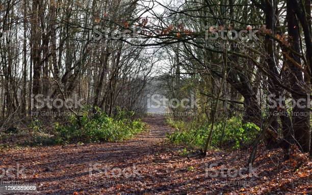 Photo of A secret woodland path to the lake with trees on each side and fallen leaves underfoot