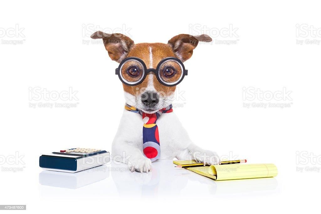secretary accountant  dog stock photo