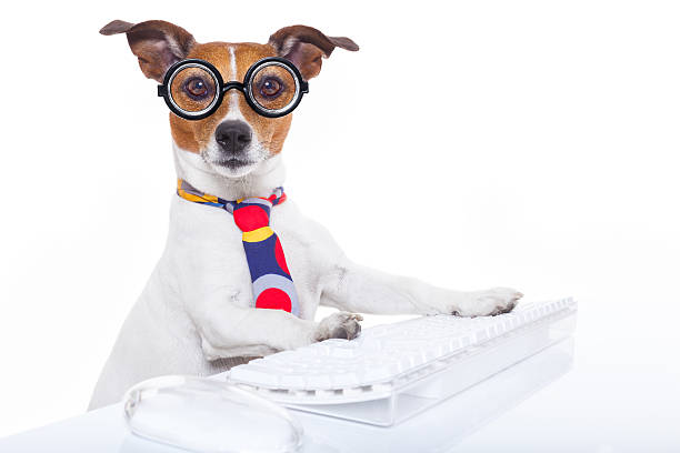 secretary-dog-picture-id473517788?k=6&m=