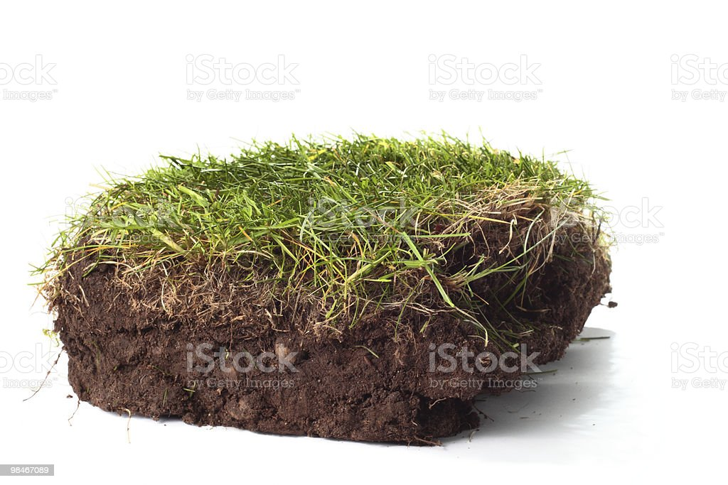 Section of lawn showing soil and grass on white background royalty-free stock photo