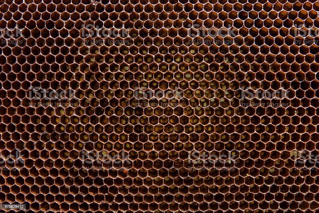 Abschnitt der Wachs Waben aus Bienenstock als Hintergrund. - Lizenzfrei Bestäubung Stock-Foto