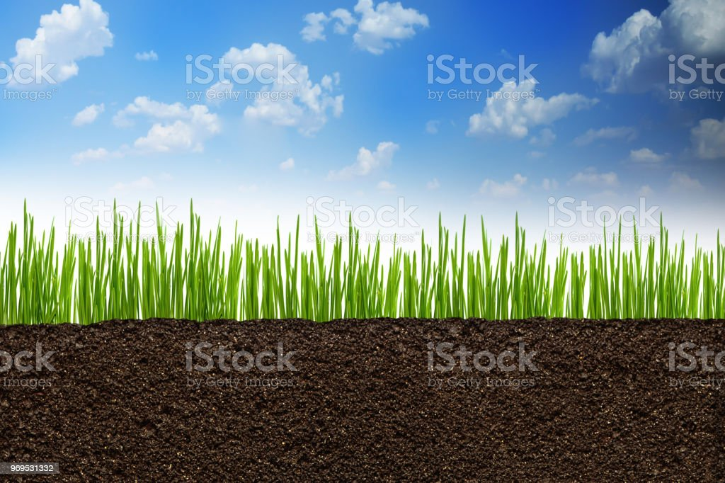 Section or profile of natural soil with green grass under the clear blue sky stock photo