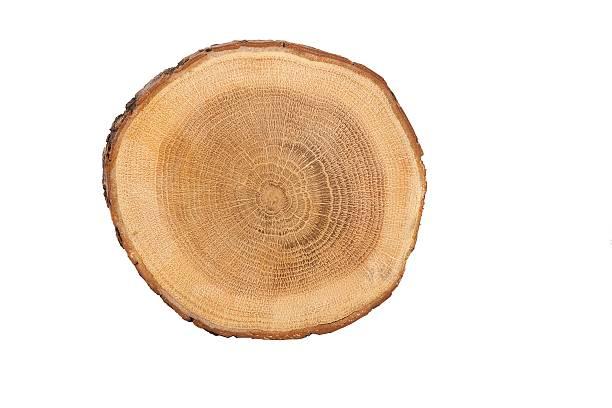 Vista modular de árvore - foto de acervo