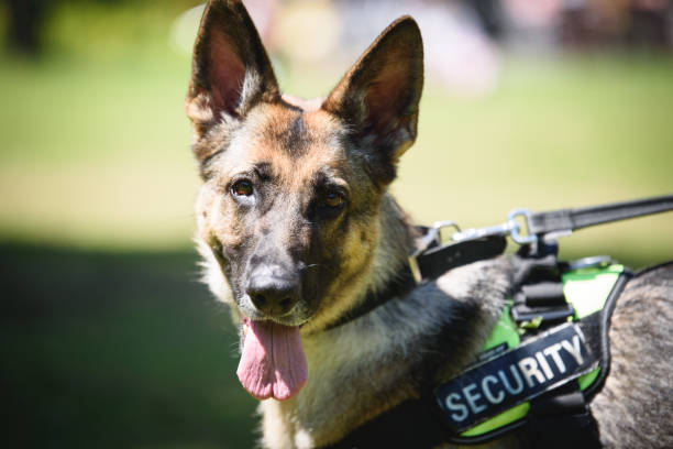 Security Dog stock photo