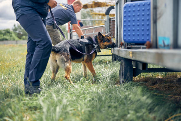 Security guards with dogs checking luggage outdoors at airport stock photo