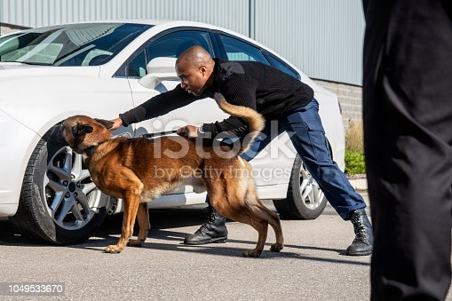 K-9 security professional checking a vehicle with a trained sniffer dog.   Real people, trained K9 and security professionals.