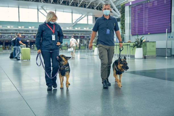säkerhetsarbetare med upptäckt hundar går i flygplatsterminalen - hunddjur bildbanksfoton och bilder