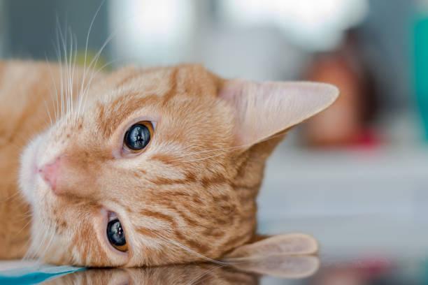 ingetogen kat - ketamine stockfoto's en -beelden