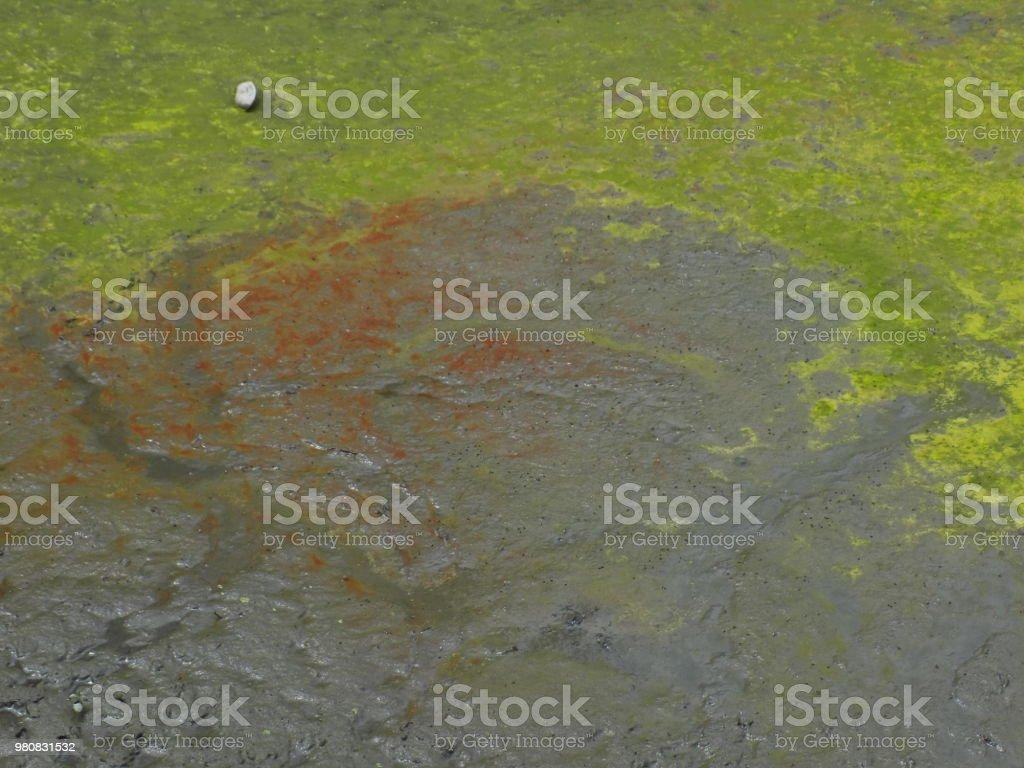 Sediment and algal bloom stock photo