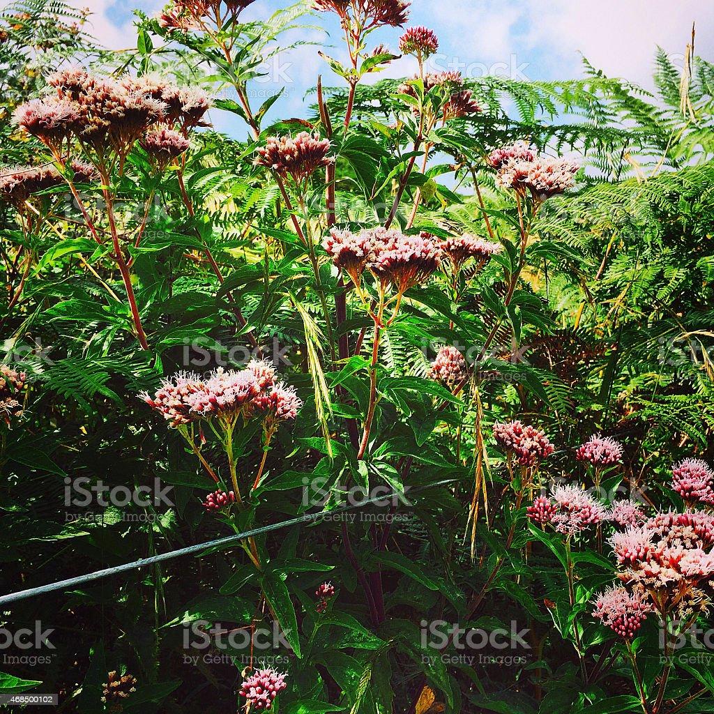 Sedum and Bracken growing over steel wire fence stock photo
