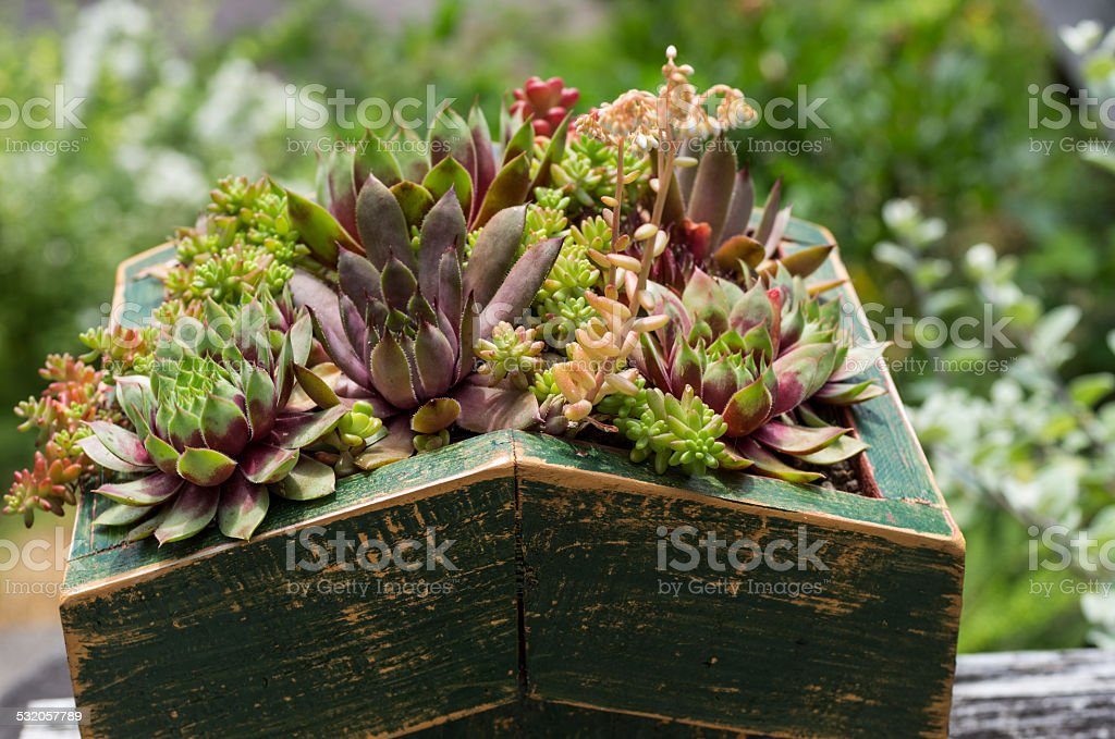 Sedum plants used for green roof stock photo