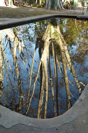 나는 나무를 참조 0명에 대한 스톡 사진 및 기타 이미지