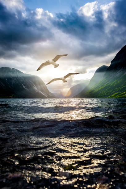 see gulls at a fjord - uccello marino foto e immagini stock