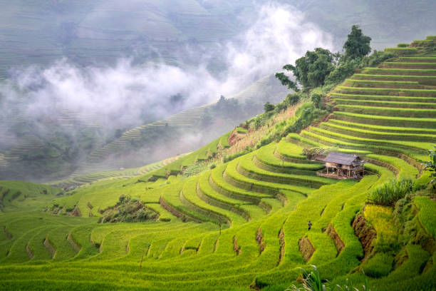 See the gorgeous terraces in Mu Cang Chai sink in the mist at dawn stock photo