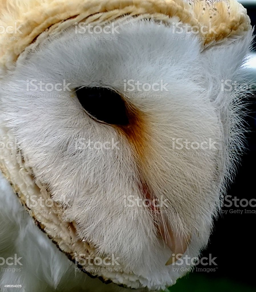' I see you ' stock photo