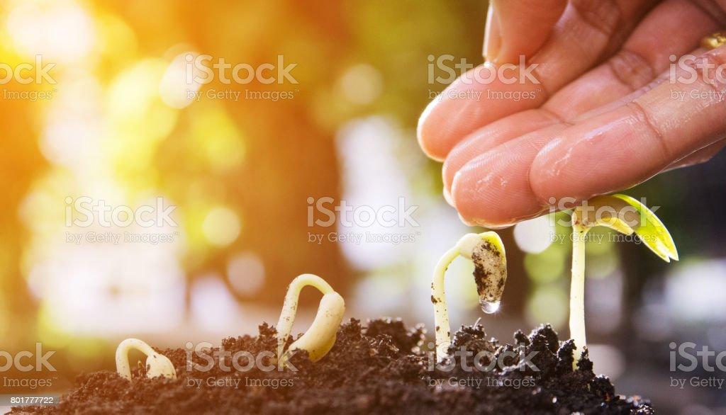 seed, evolution, germination stock photo