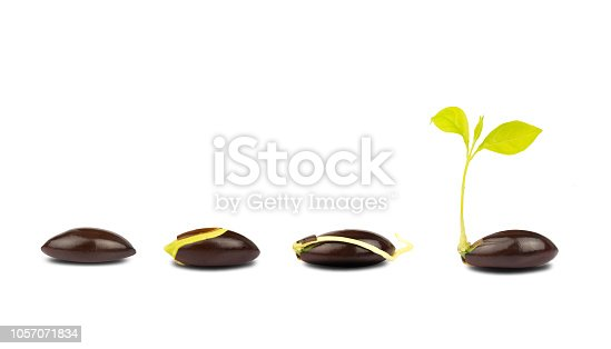 147512291 istock photo seed germination process isolate on white background.of planting tree. Seedling gardening plant. Seeds sprout in ground. Sprout, plant, tree 1057071834