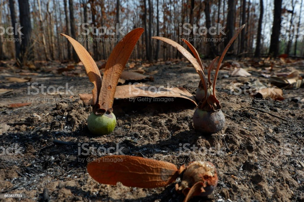 Seed plant in wildfire. stock photo