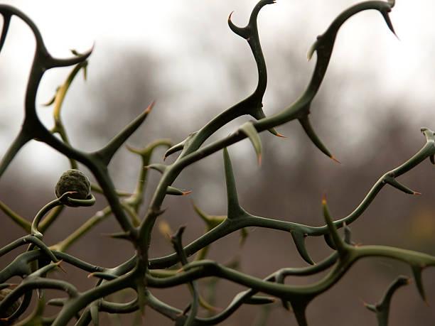 pflanzensamen & dornen - baumgruppe stock-fotos und bilder