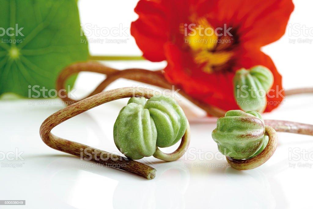 Seed vessels of nasturtium (Tropaeolum majus), close-up stock photo