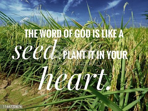 istock Seed words of God from the bible verse of the day, be encouraged in daily life design for Christianity. 1144722674