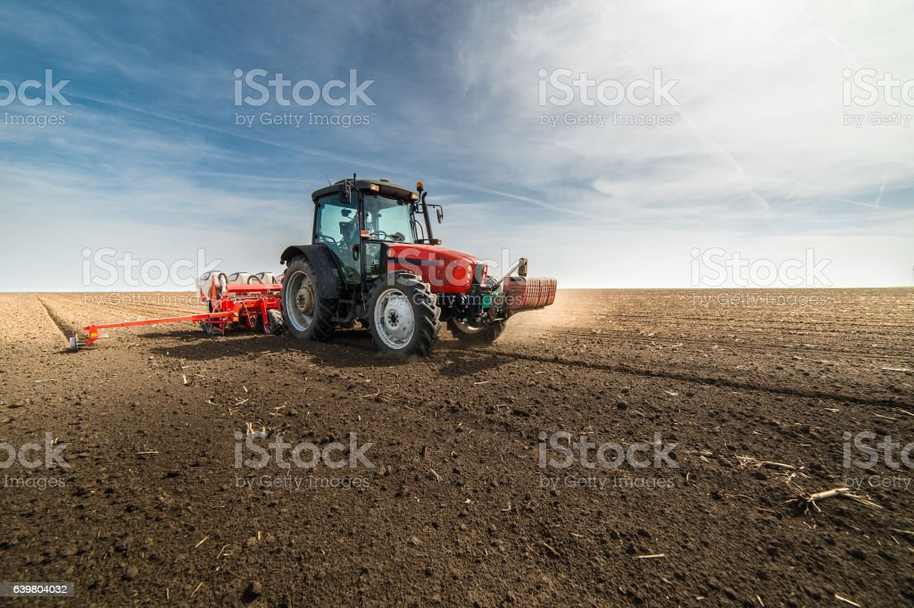 seeding crops at field stock photo