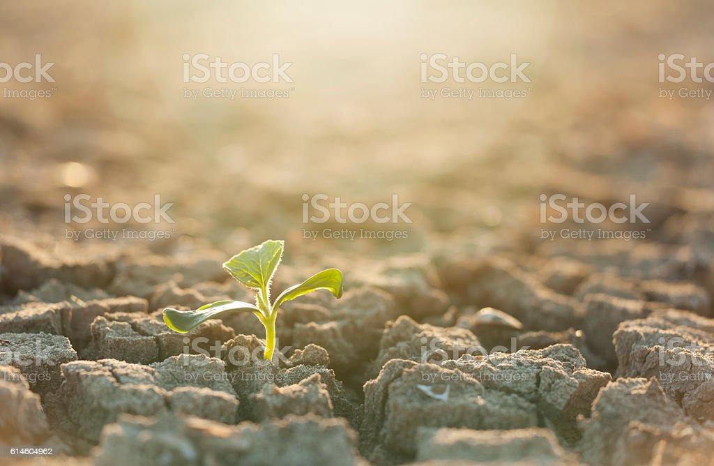 Seeding Plant stock photo