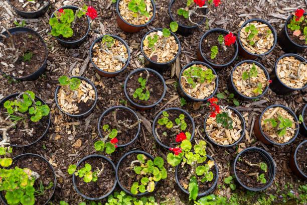 Setzlinge von Pflanzen in Töpfen für Gartenbau, Landwirtschaft, Landwirtschaft – Foto