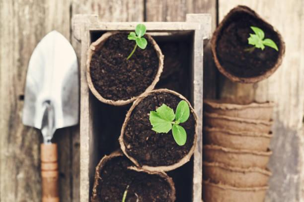 Saatgut und Töpfe für den Start in die Frühjahrssaison – Foto