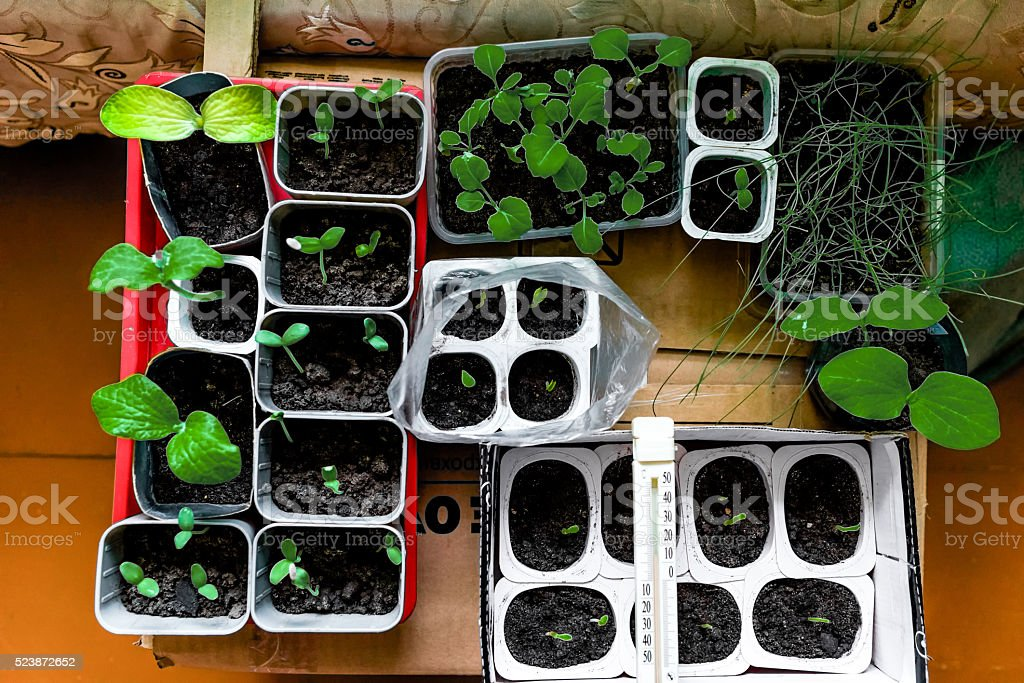 Seedling at home stock photo