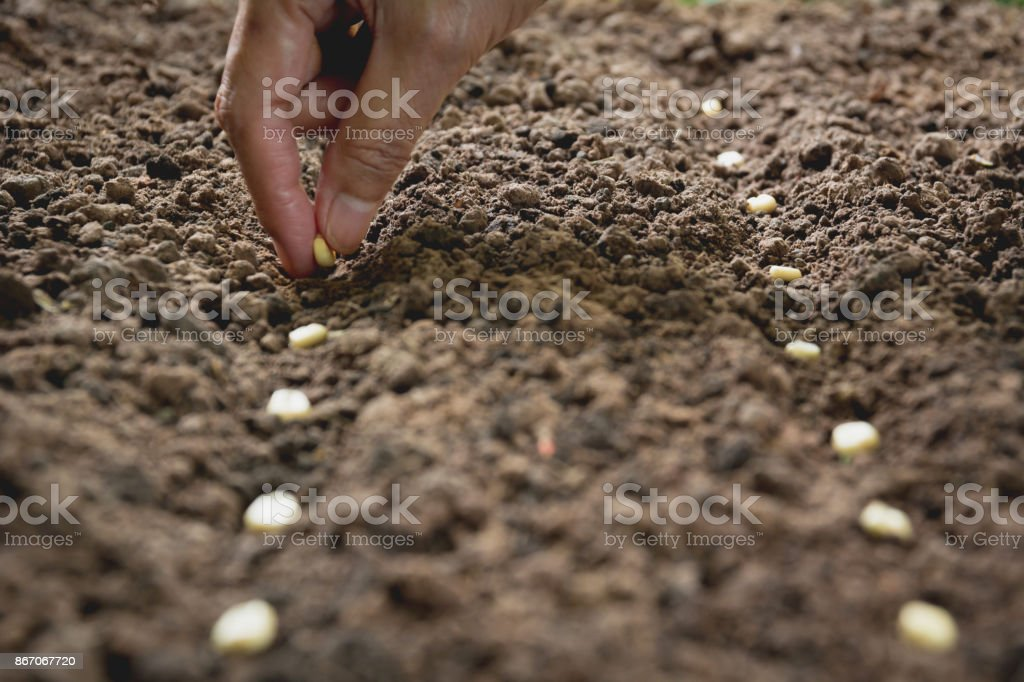 Seedling concept by human hand, Human seeding seed in soil with plant. royalty-free stock photo