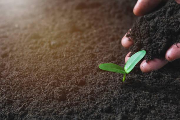 Seedling-Konzept von Menschenhand mit jungen Bäumen auf Naturhintergrund. – Foto