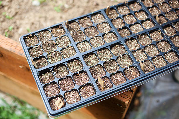 Seedling Container stock photo
