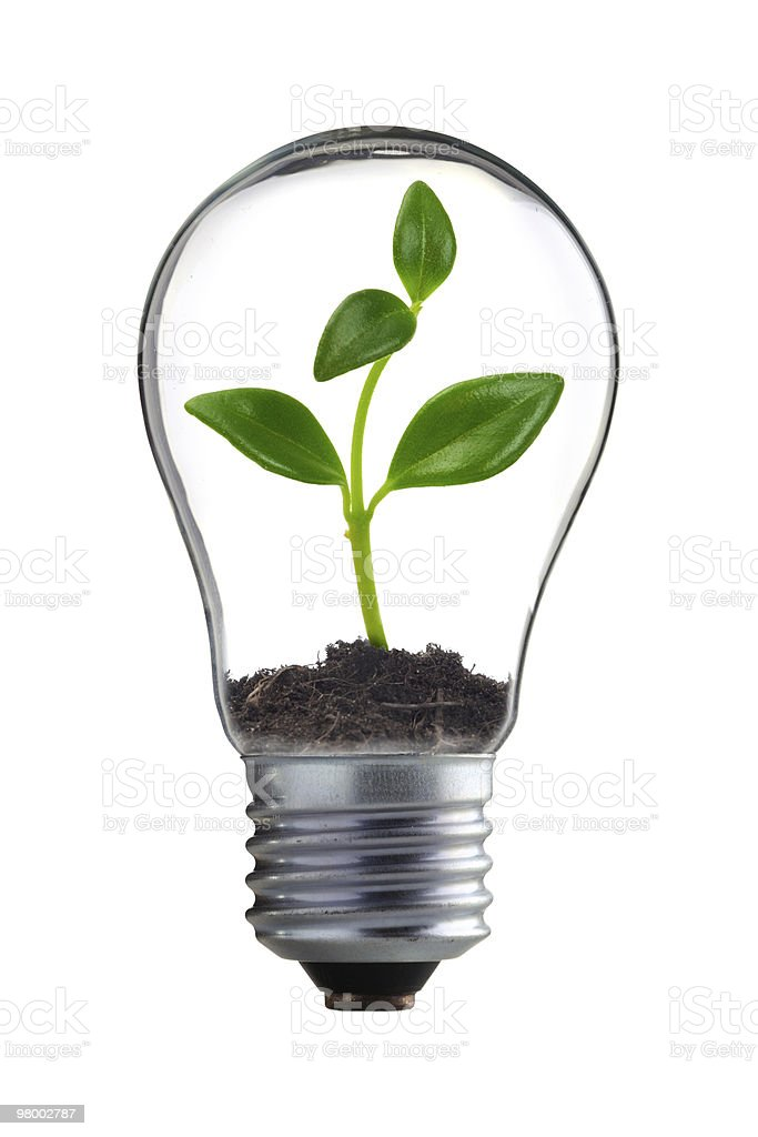 A seedling growing inside of a light bulb royalty free stockfoto