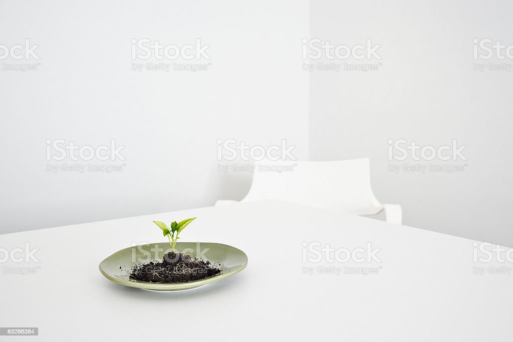 Seedling growing on plate royaltyfri bildbanksbilder