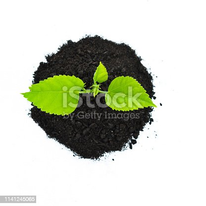 Seedling growing out of soil on white background.