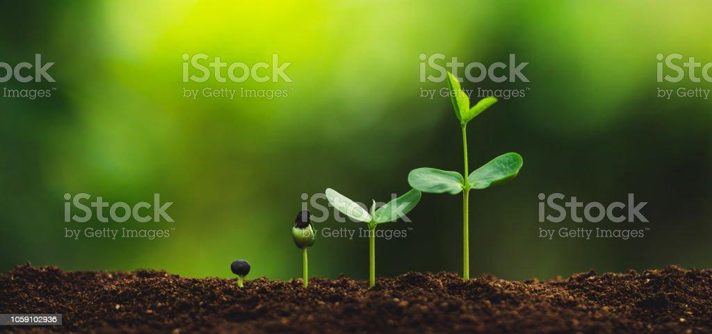 Sämling Planting Bäume Bewässerung eines Baumes Tageslicht – Foto