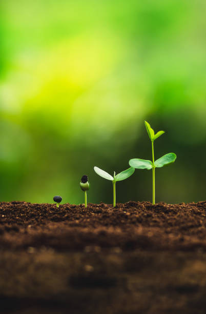 Seedling growth Planting trees Watering a tree Natural light Seedling growth Planting trees Watering a tree Natural light ancestry stock pictures, royalty-free photos & images